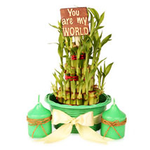 3 layers Lucky Bamboo Pot Hamper: Good Luck Plants for Thank You