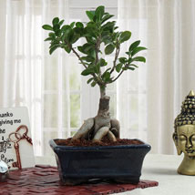 Bonsai Beauty: Plants for anniversary