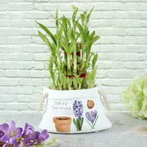 Filled With Prosperity: Plants