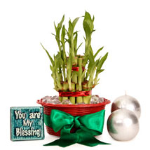 Lucky Bamboo Hamper For You:  Good Luck Plants for Him