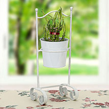 Lucky Bamboo Planter: Send Lucky Bamboo