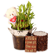 Lucky With Bamboo Hamper: Plants for Valentines Day